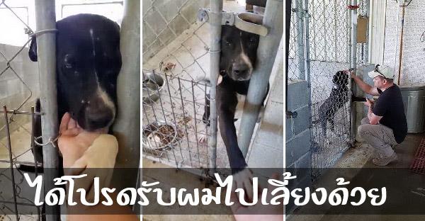 สุนัขไร้บ้านน่าสงสาร ยื่นมืออ้อนวอนทุกคนที่ผ่านมา หวังให้ช่วยรับมันไปอยู่ด้วย