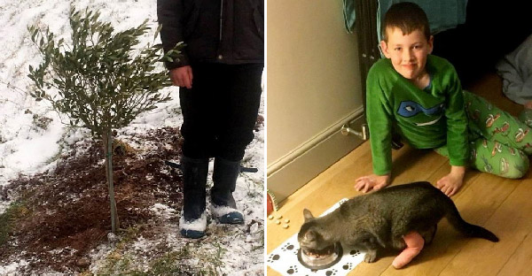เจ้าของเจอแมวลายสลิดคิดว่าแมวตัวเองไม่รอดจากพายุหิมะ ก่อนรุ่งขึ้นมันจะเดินกลับมากินข้าวหน้าตาเฉย