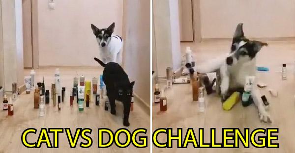 ไวรัลชาเลนจ์ใหม่สำหรับคนเลี้ยงสัตว์ ที่หมา-แมวต้องจัดการกับอุปสรรคที่อยู่ข้างหน้าให้ได้