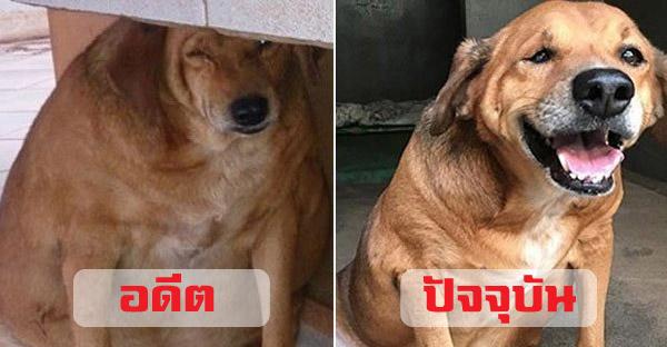13 หมา-แมวอ้วนจ่ำม่ำ ที่สามารถฟิตหุ่นจนสุขภาพดีได้อีกครั้ง