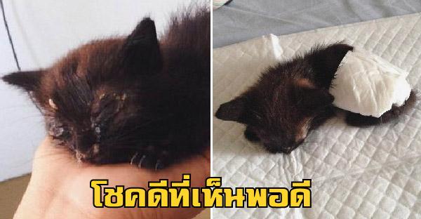 สาวตาไวเห็นคนขว้างลูกแมวเข้าพุ่มไม้ ต่อหน้าต่อตา ก่อนจะรีบเข้าไปช่วยไว้ได้ทันเวลา