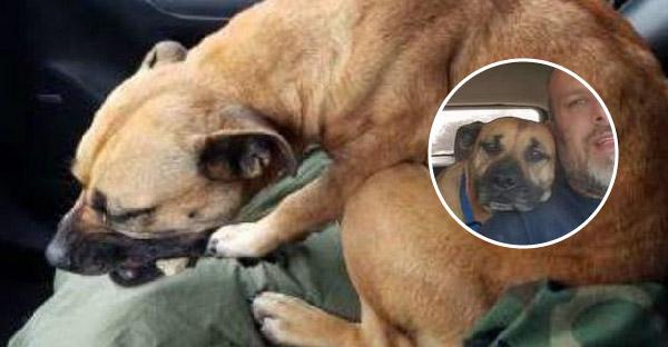 สุนัขจรจัดที่สิ้นหวังกระโดดขึ้นรถคนแปลกหน้า และโชคดีที่ได้เจอทาสหมาตัวพ่อ