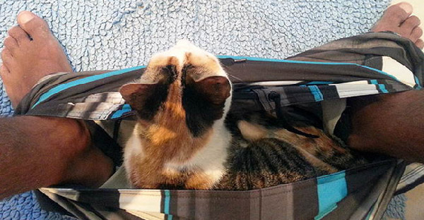 23 ภาพเฮฮาของสัตว์เลี้ยงตัวแสบ ที่ไม่เคยให้ปลดทุกข์อย่างสบายใจได้เลย