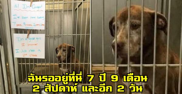 สุนัขไร้บ้านอาศัยหลังกรงขังมานานเกือบ 8 ปี และภาพของมันกลายเป็นไวรัลทันที