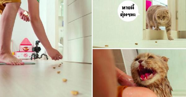 เจ้าเหมียวเจอวางขนมโปรดล่อ จนมาถึงห้องน้ำที่เกลียด จึงต้องโดนจับอาบน้ำซักที