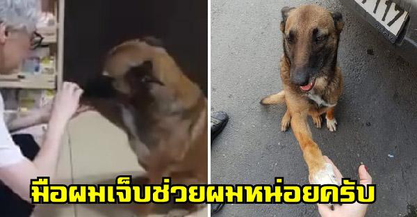 หมาจรจัดบาดเจ็บนั่งรอหน้าประตูร้านขายยา เพื่อขอความช่วยเหลือจากเภสัชกร
