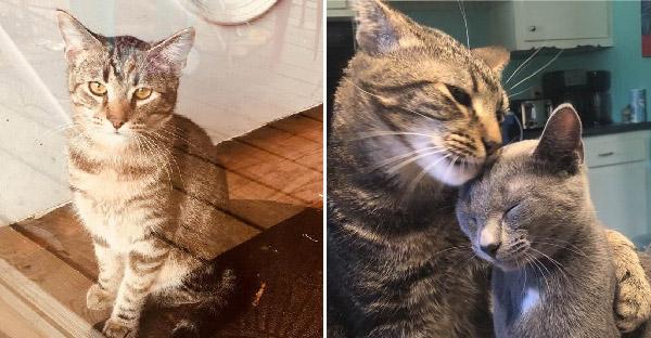 แมวหนุ่มโลกส่วนตัวสูงไม่เคยสุงสิงกับใคร แต่พอเจอสาวน้อยสีสวาด กลับเปลี่ยนเป็นมุ้งมิ้งไม่เหมือนเคย