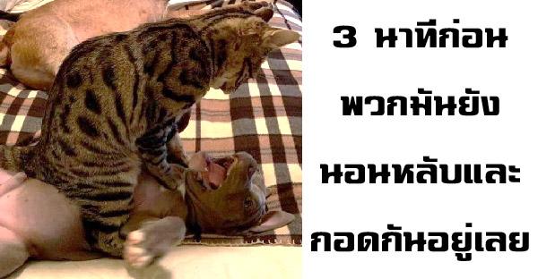 17 ภาพสัตว์เลี้ยงตรรกะเพี้ยน ที่เจ้าของไม่อาจเข้าใจพฤติกรรมได้เลย