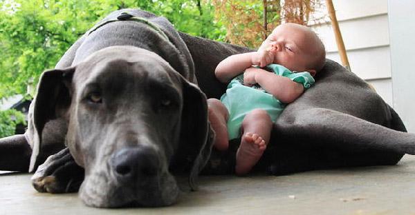 20 ภาพยืนยันว่าหมาเป็นทั้งบอดี้การ์ด และทุกอย่างให้กับลูกตัวน้อยได้ดีที่สุด