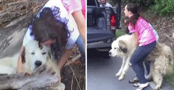 ครอบครัวช่วยชีวิตสุนัขตัวโตข้างถนน อดีตเคยมีเจ้าของแต่ย้ายบ้านและทิ้งมันไว้