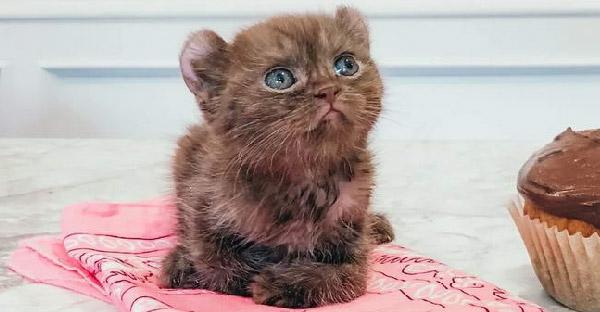 บ้านอุปถัมภ์เปิดรับลูกแมวขาบิดหูเรดาร์น่ารักไม่เหมือนใคร เพื่อโอกาสครั้งที่สองในชีวิต