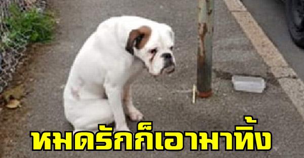 หมาโดนล่ามไว้กับเสาเพียงลำพัง มีแค่ชามน้ำใบเดียว คาดเจ้าของหมดใจเอามาทิ้ง