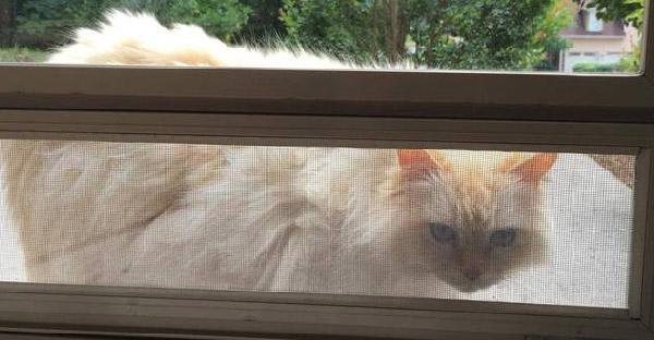 หลังแมวที่เลี้ยงมา 17 ปีจากไป แมวข้างบ้านก็ปรากฎตัวมาปลอบใจเธอพอดี