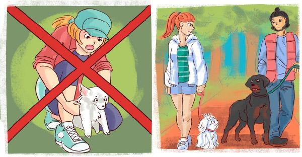 วิธีแก้ปัญหาเมื่อสุนัขของคุณไปมีเรื่องกับสุนัขตัวอื่น