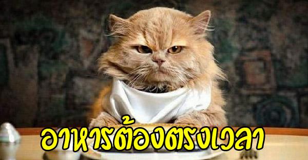 10 เคล็ดลับพิชิตใจแมวให้ตกหลุมรัก ไม่ยากอย่างที่คิด