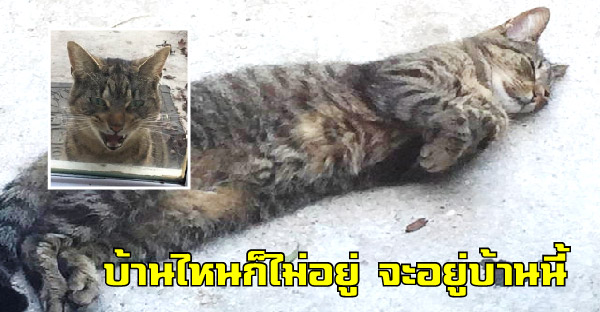 สาวหาบ้านให้แมวจรจัด แต่มันก็กลับมาบ้านเธอทุกครั้ง จนเธอต้านทานลูกตื้อไม่ไหวต้องรับเลี้ยงไว้เอง