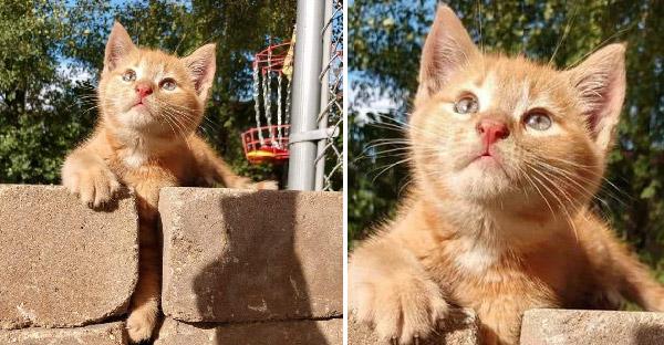 ลูกแมวจรจัดสะกดมนุษย์ให้คิดถึงทั้งคืน และวันต่อมาเขาก็สมยอมเป็นทาสแต่โดยดี