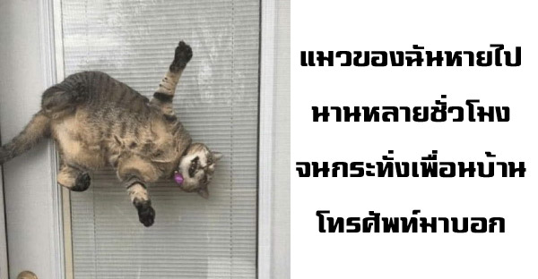 17 เหตุการณ์เฮฮาที่สร้างรอยยิ้มให้กับทาสแมว
