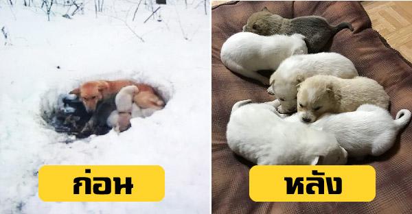 แม่หมาสุดกล้าหาญ ใช้อุ้งเท้าขุดหลุมบนหิมะที่หนาวเหน็บ เพื่อให้ลูกทั้ง 6 อบอุ่นและปลอดภัย
