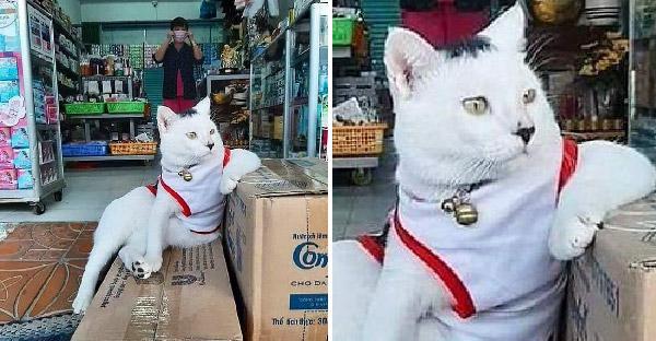 มัดรวมภาพแมวเหมียวที่ทำตัวเป็นเถ้าแก่ร้านค้า จนสร้างความเฮฮายกใหญ่บนโลกออนไลน์