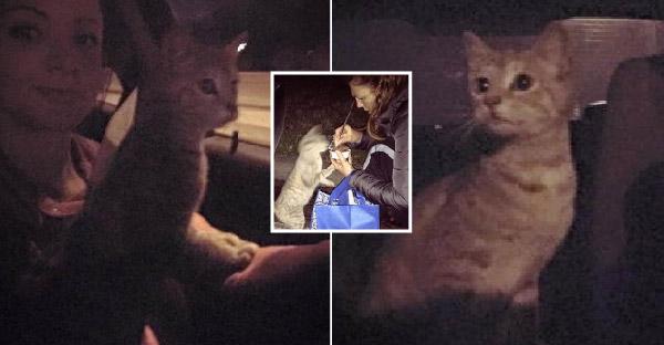 แมวจรจัดหิวโซกินอาหารด้วยความหิว จนเธออดสงสารไม่ได้ จึงรีบอุ้มกลับบ้านและหาคนใจดีรับเลี้ยง