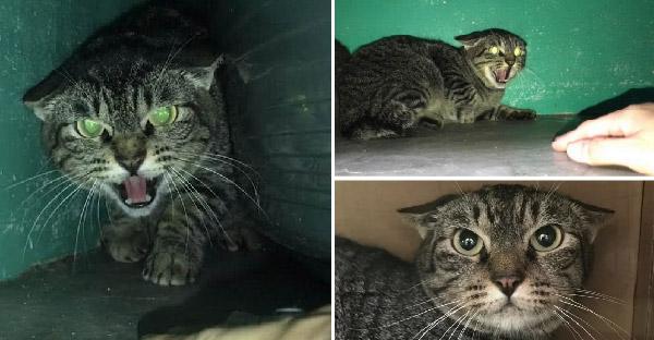 แมวเกรี้ยวกราดขนาดไม่ยอมให้ใครแตะตัวนานแรมปี แต่เจอสาวตื้อจนครองใจได้ในที่สุด