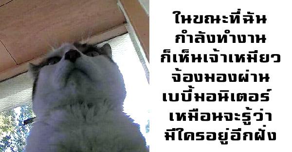 มัดรวมเหตุการณ์ที่ยืนยันว่าแมวเปรียบเสมือนลูกมากกว่าสัตว์เลี้ยง