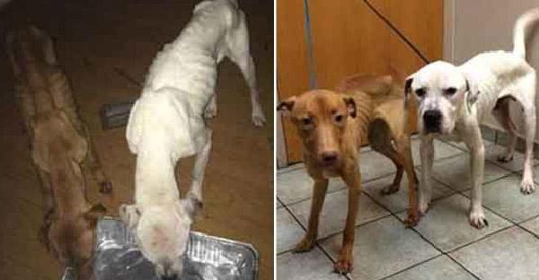 กู้ภัยเข้าช่วยเหลือสองสุนัขถูกขังไว้ในตึกร้าง ก่อนที่ทุกอย่างจะสายเกินไป