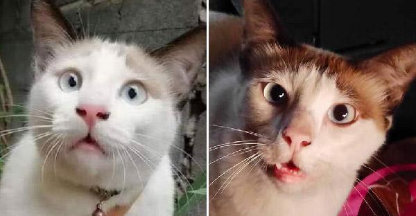 รู้จัก 'ไทรอั้ม' แมวหน้าเหวอ ที่แฟนคลับถามหา เพราะความฮาไม่เหมือนใคร