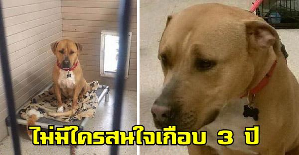 หมาไร้บ้านน่าสงสารใช้ชีวิตกว่า 2 ปีครึ่งในศูนย์พักพิง จนมีหน้าตาเศร้าสลด ก่อนครอบครัวใจดีมอบโอกาสครั้งที่สองฟกำด