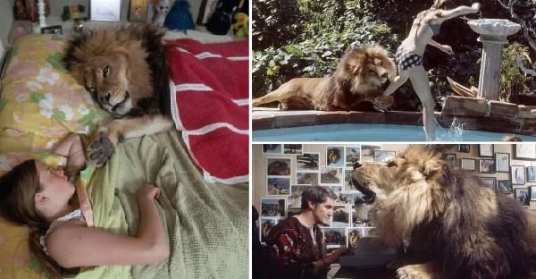 ครอบครัวดาราฮอลลีวูดเอาสิงโตมาเลี้ยงที่บ้าน จนเกิดเรื่องราวมากมายและสายเกินไปที่จะเสียใจ