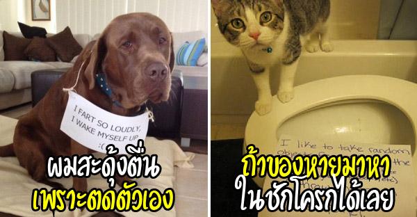 25 คำสารภาพผิดของสัตว์เลี้ยงตัวดี ที่ต้องถูกประจานให้ขายหน้ากันซักสองสามที