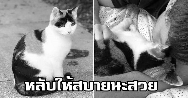 เจ้าของแทบล้มทั้งยืน หลังมีคนแจ้งว่า 'สวย' แห่งกลุ่มแมวสายดาร์กโดนสุนัขจิ้งจอกรุม จนต้องจากไปก่อนเวลาอันควร