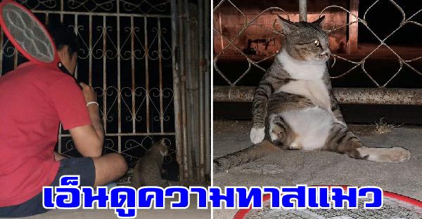 หมอสั่งห้ามขัดใจแมวภูมิจะตก ทาสหนุ่มจึงต้องนั่งเฝ้าช็อตยุงให้ จนกว่านางจะยอมเข้าบ้านนอน