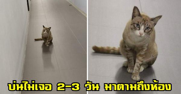 แมว รปภ. แอบตามสาวถึงห้อง หลังเธอบ่นคิดถึงไม่เจอ 2-3 วัน