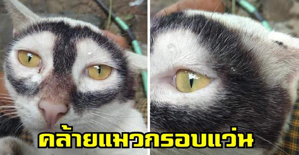ชาวเนตพบแมวคล้ายสายพันธุ์ 'กรอบแว่น' จนกลายเป็นไวรัลบนโลกออนไลน์