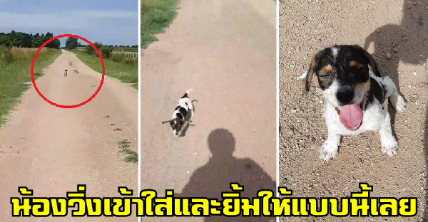 ลูกหมาจรจัดวิ่งเข้าหานักปั่นจักรยาน กระดิกหางดีใจ ยิ้มแป้นใส่จนได้บ้านสมใจ
