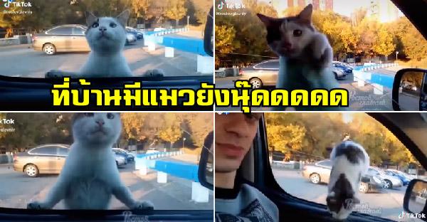 ลูกแมวจรจัดทำเนียนปีนขึ้นรถอย่างไว ยัดเยียดความเป็นทาสแมวให้ถึงบนรถ