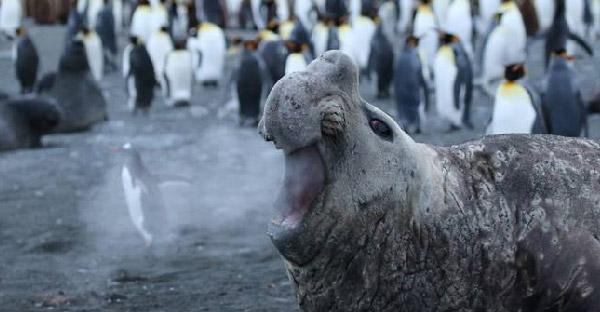 20 ภาพสัตว์ป่ายอดเยี่ยมที่ผ่านเข้าชิงจากการประกวด Comedy Wildlife
