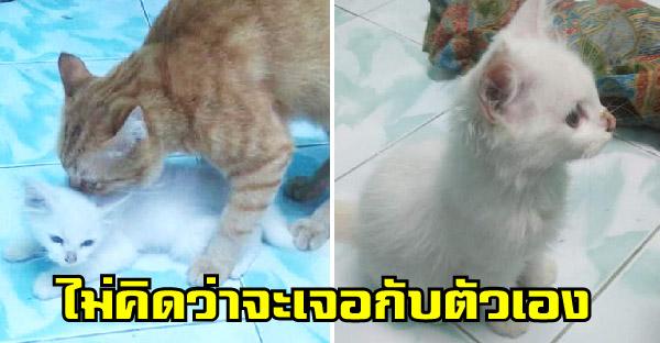 ชาวเนตเจอเซอร์ไพรซ์ หลังเคยได้ยินมาว่าแมวไปขโมยลูกแมวคนอื่น ไม่คิดว่าจะเจอกับตัวเอง