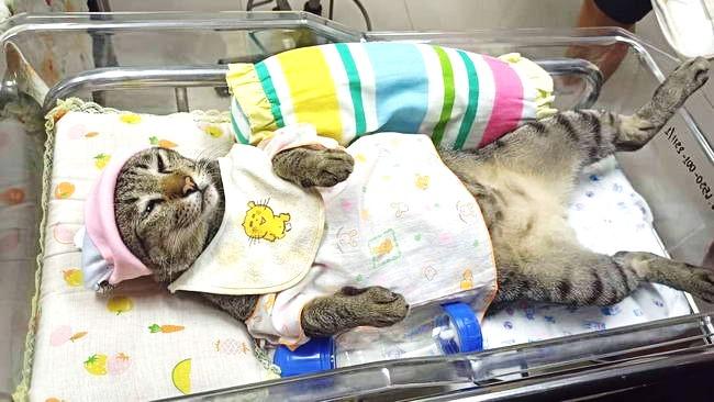 สลิดจำแลงแปลงกายเป็นเด็กทารก นอนนิ่งให้พี่นักศึกษาฝึกปฏิบัติวิชาการพยาบาลเด็กอย่างชิลล์