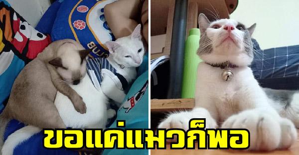 สาวยอมจบชีวิตคู่ ขอแค่แมว 5 ตัว หอบไปอยู่กับยายที่เคยด่า วันนี้ไม่บ่นสักคำ