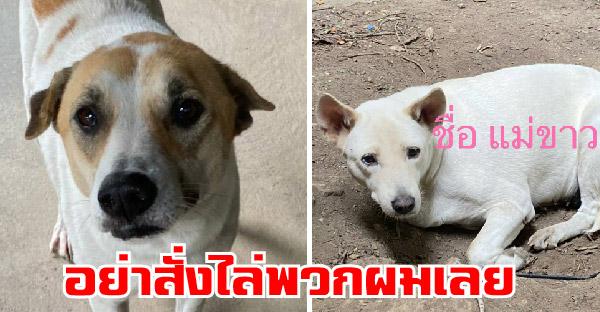 WDT รับเรื่องร้องเรียนขอให้มีการเจรจาขอความเมตตา ให้น้องหมานับสิบชีวิตได้อาศัยอยู่ต่อไป
