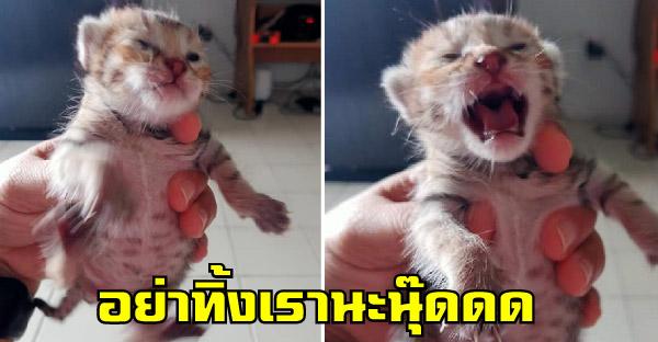 ลูกแมวตายังไม่ลืมโดนแม่ทิ้ง โชคดีสาวใจบุญช่วยชีวิต ผ่านไปเดือนกว่าน้องฉายแววน่ารักมาก