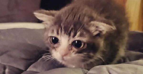 ครอบครัวอุปถัมภ์ช่วยชีวิตลูกแมวแคระหายาก และทำให้ความฝันน้องกลายเป็นจริง