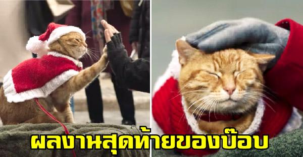 พบกับผลงานสุดท้ายของ Bob ในโรงภาพยนตร์ ที่จะตราตรึงหัวใจทาสแมวทุกคนไว้นิรันดร์
