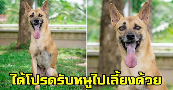 อดีตสุนัขจรจัดต้องเผชิญเหตุการณ์เลวร้ายจนต้องสูญเสียขา ปัจจุบันยิ้มได้และรอผู้อุปถัมภ์อย่างเป็นทางการ