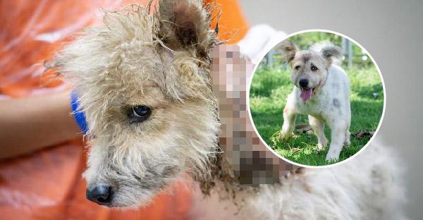 พบกับ 'โซฟี' สุนัขที่รอดจากการโดนน้ำร้อนลวกที่คอ จนกลายเป็นสุนัขที่น่ารักที่สุดในปัจจุบัน