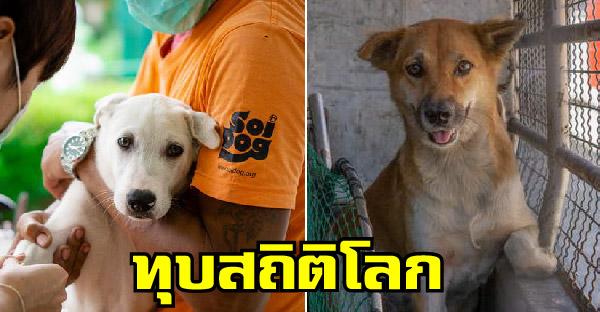 มูลนิธิเพื่อสุนัขในซอยทุบสถิติ ทำหมันสุนัขและแมวกว่าครึ่งล้านตัว