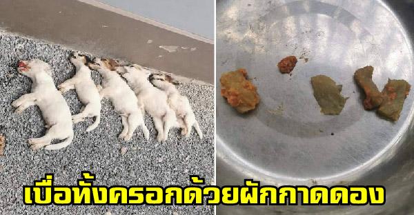WDT รับเรื่องร้องเรียนคดีวางยาเบื่อลูกหมาทั้งครอกด้วยผักกาดดอง